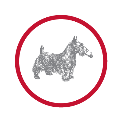 Sketch of dog encased in circle