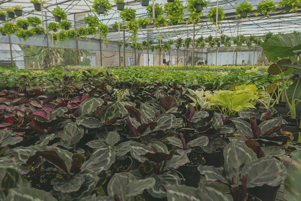 Shot of Gabriella Plants plant nursery